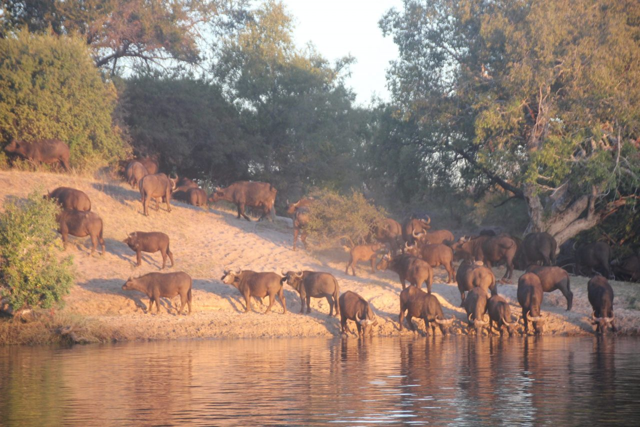 African Safaris Corporate travel packages